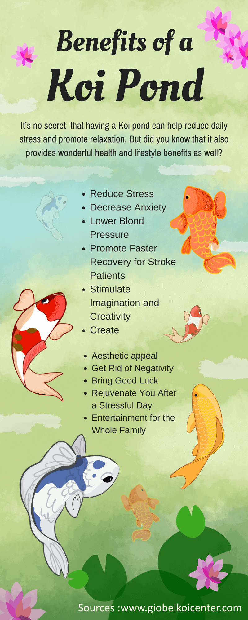 relaxing hobbies 10 koi fish therapeutic effects will make you feel better