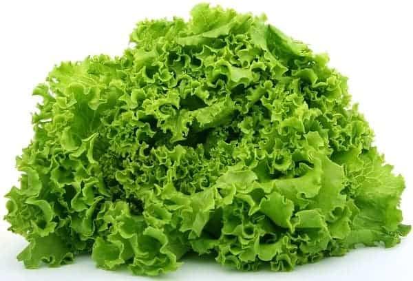 what do koi fish eat lettuce