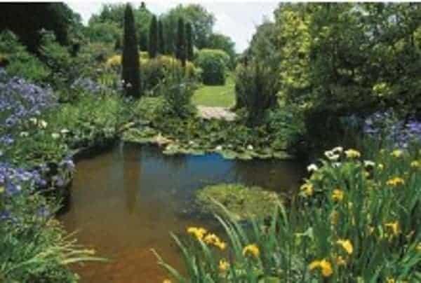 a beautiful well maintain koi pond maintenance