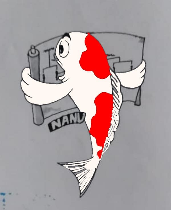koi fish judging quality