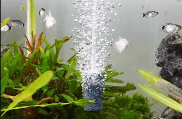 aquarium aeration essential factor to aquarium fish