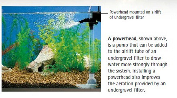 simple guide to aquarium filtration power head filter