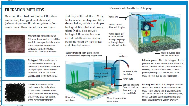 simple guide to aquarium filtration