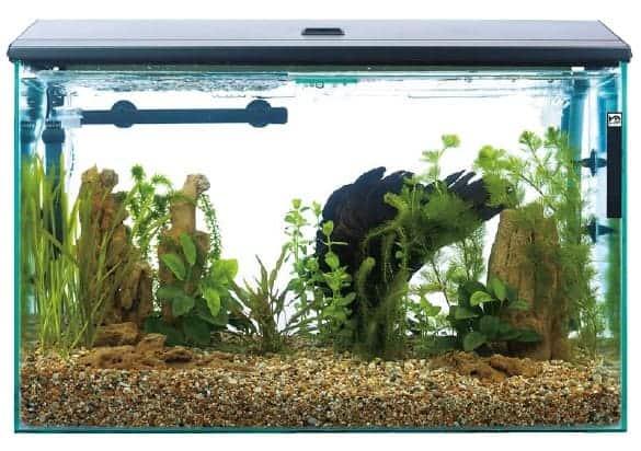 aquarium supplies walmart
