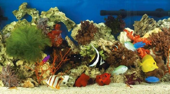 what to feed saltwater fish