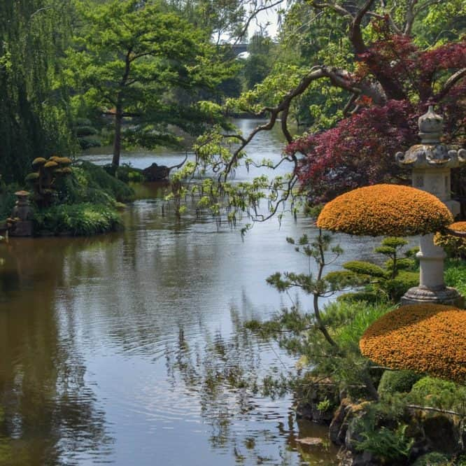 What A Water Garden Can Teach You