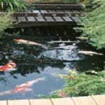 how to build a koi pond
