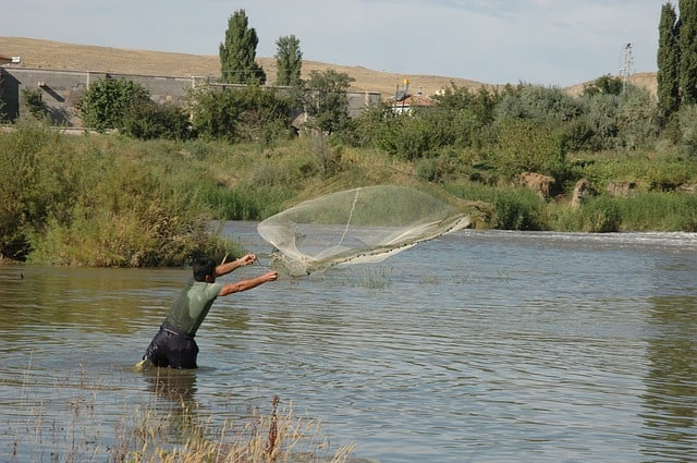 how to catch wild koi fish cast net