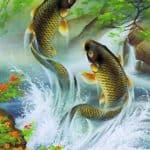 what is the spiritual meaning of the koi fish swimming upstream