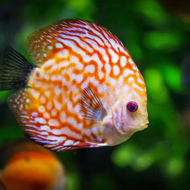 taking care of your pet fish