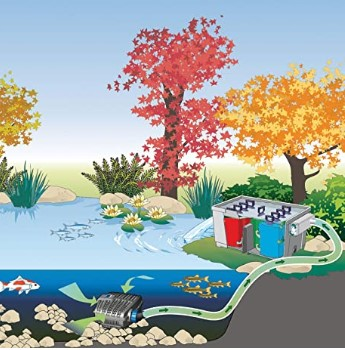 koi pond design ideas Factors to Consider When Creating a Fish Pond Design