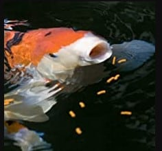 tetra pond koi vibrance fish food floating sticks