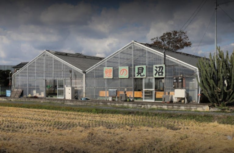 minuma koi farm