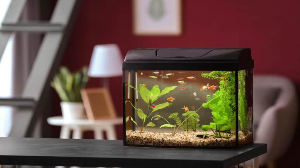 best fish tank
