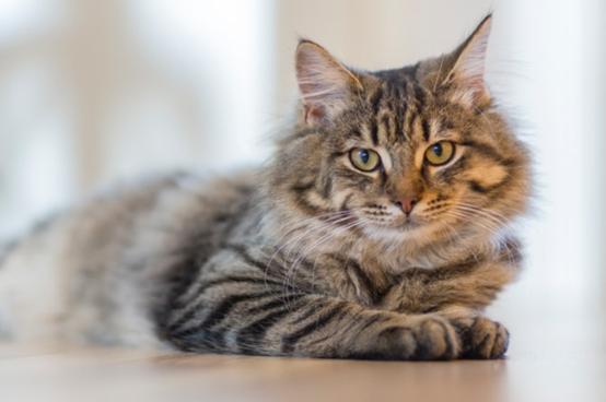 CBD Oils For Cats